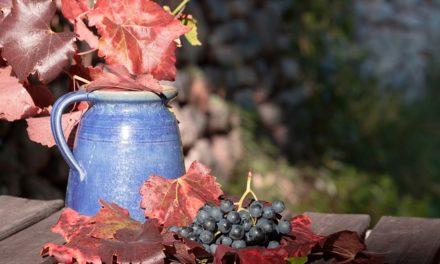 Poveste cu tâlc despre viata – Cele 10 cani de vin