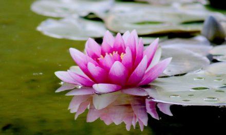 Sensul vietii este acela de a muri tanar, dar la cea mai respectabila varsta posibila. 29 De citate intelepte Zen