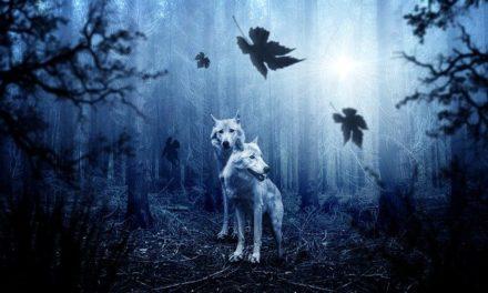 Pilda celor doi lupi – care dintre ei va castiga?